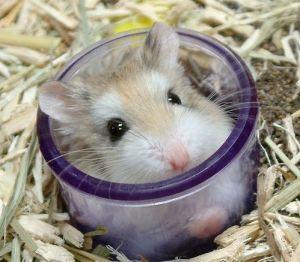 hamster017pr2